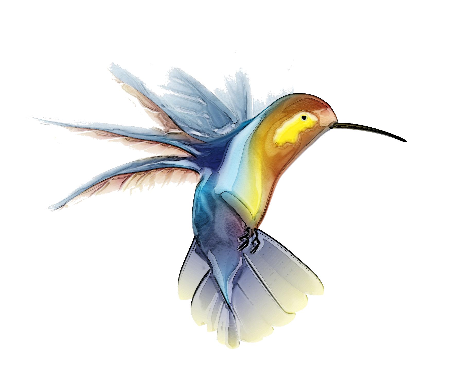 Png transparent free images. Hummingbird clipart beautiful bird