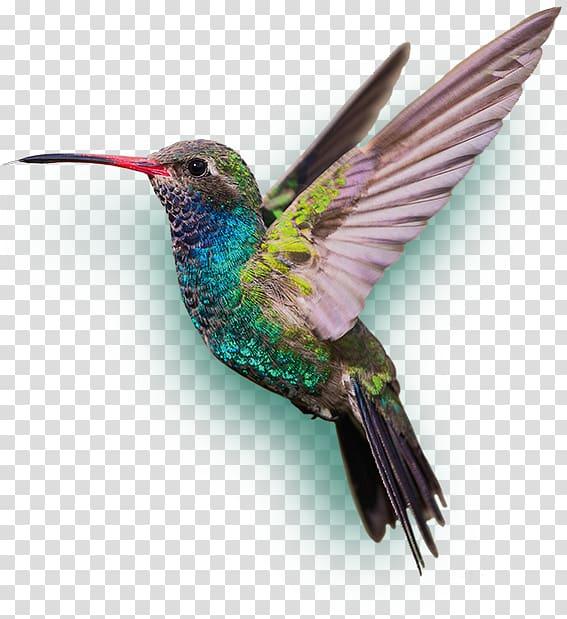 Hummingbird clipart bee. Blue and green humming
