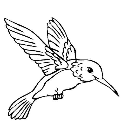 Hummingbird clipart coloring page. Color book humming birds