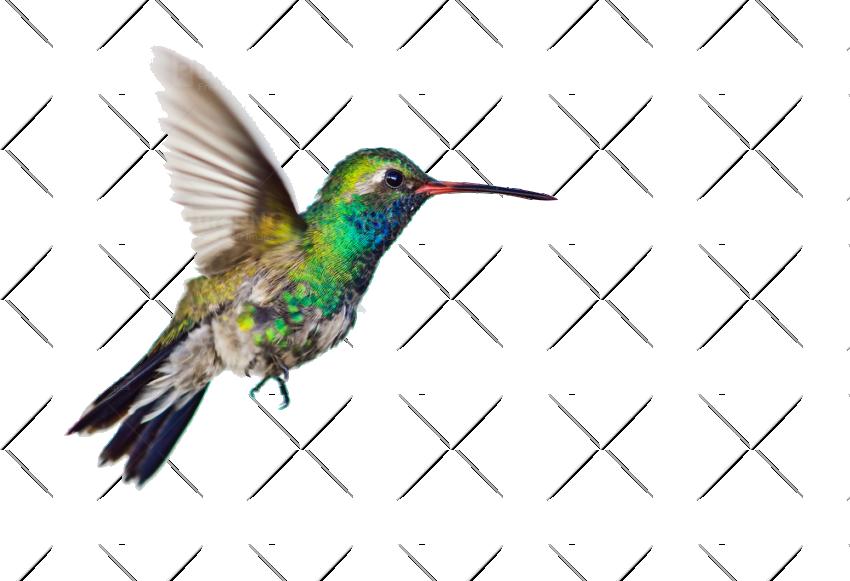 Hummingbird clipart copyright free. Stylish idea image purepng