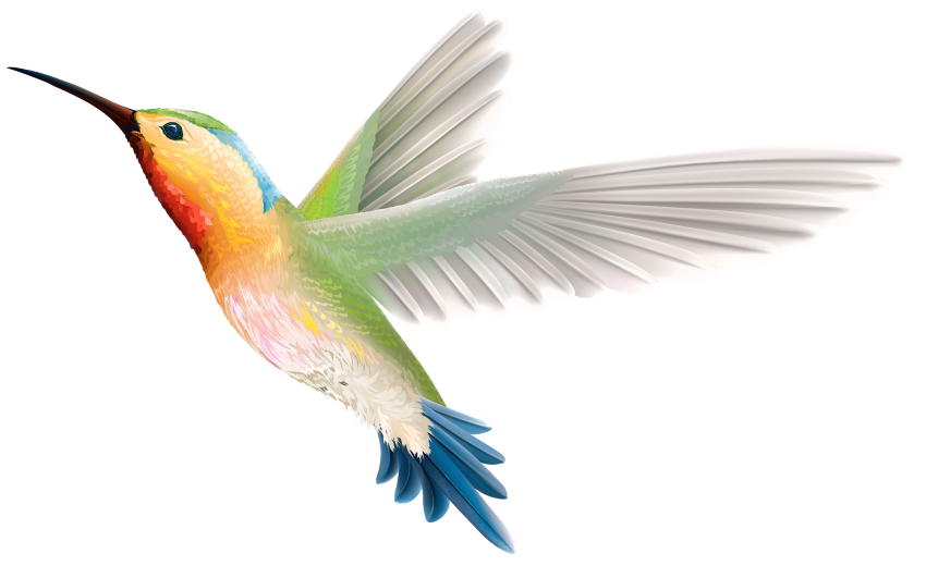 Hummingbird clipart copyright free. Png images toppng transparent