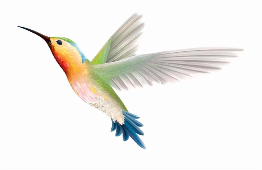 Hummingbird clipart copyright free. Png birds images hd