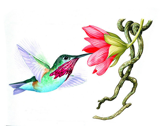 Collection of free download. Hummingbird clipart flower tattoo