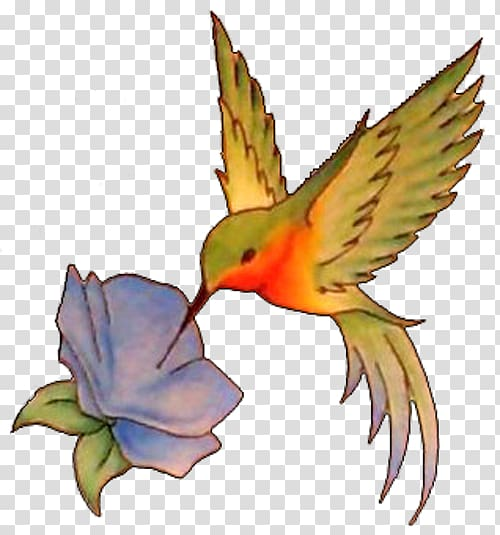 Flash transparent background . Hummingbird clipart flower tattoo