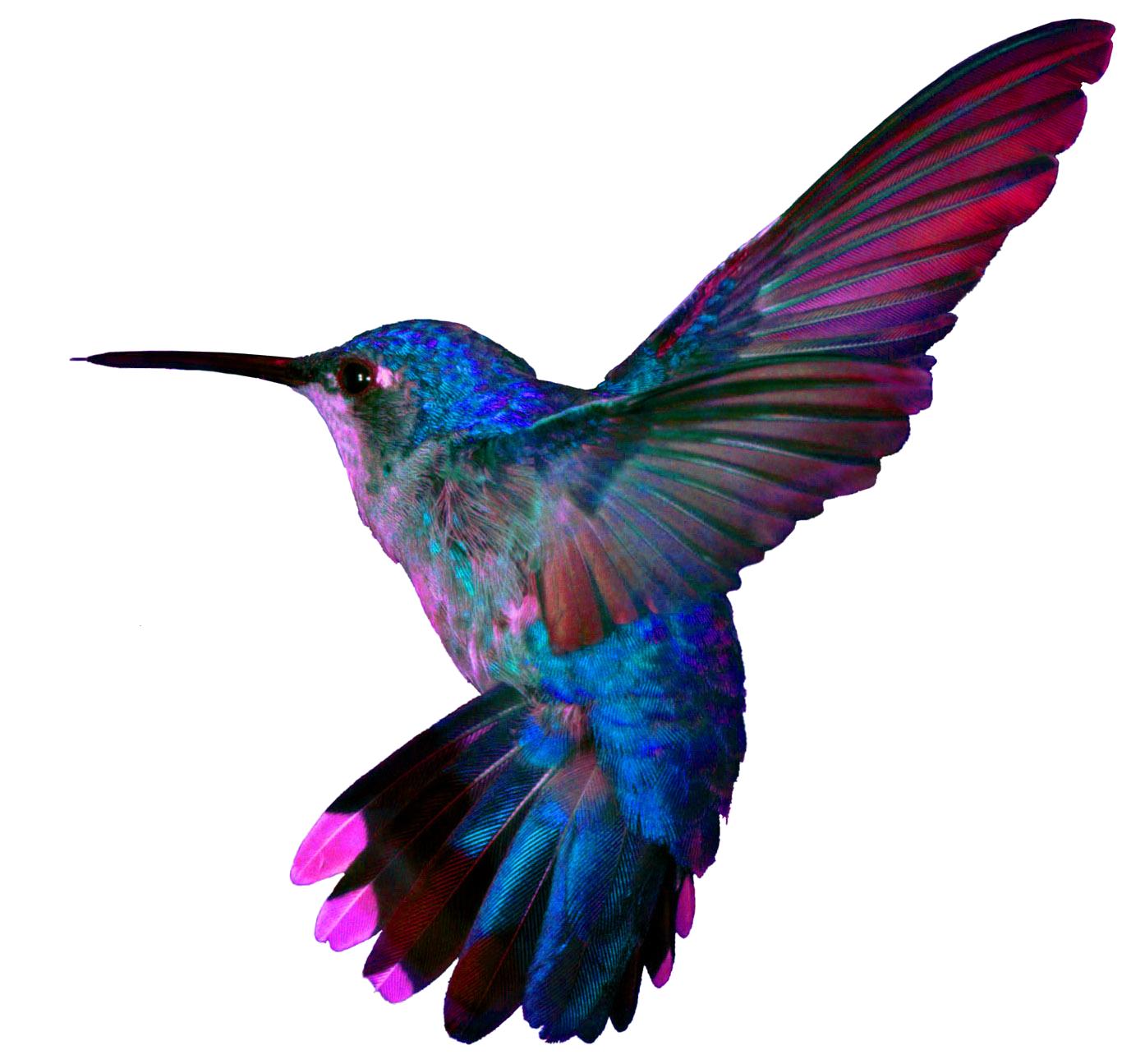 Png pretty birds pinterest. Hummingbird clipart green hummingbird