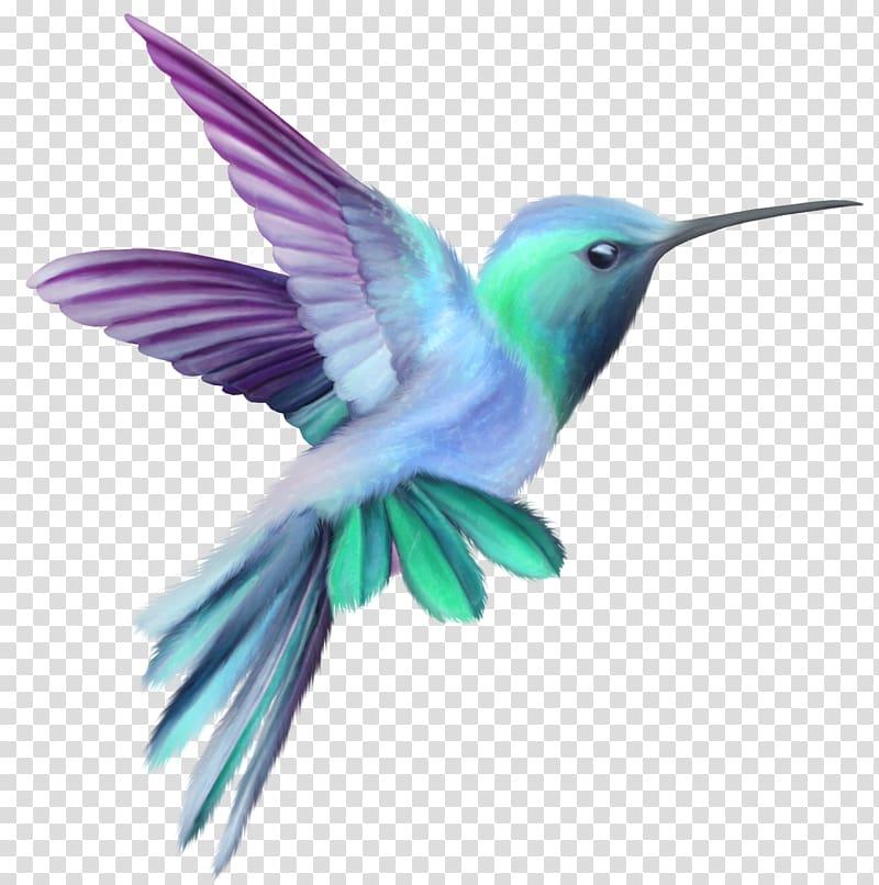 Hummingbird clipart green hummingbird. And purple illustration