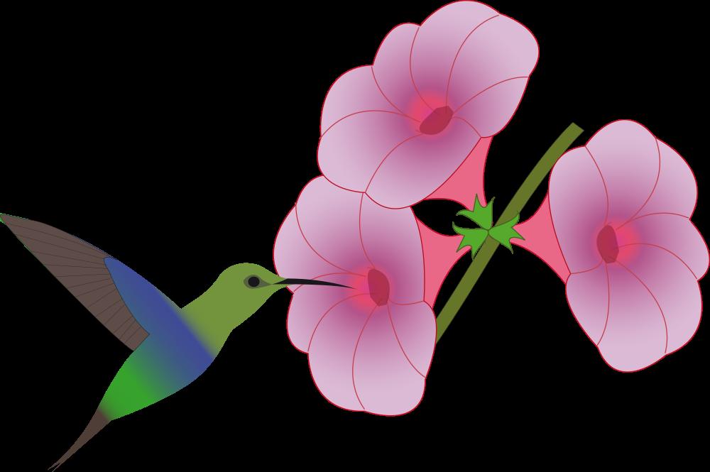Hummingbird clipart green hummingbird. Onlinelabels clip art pretty