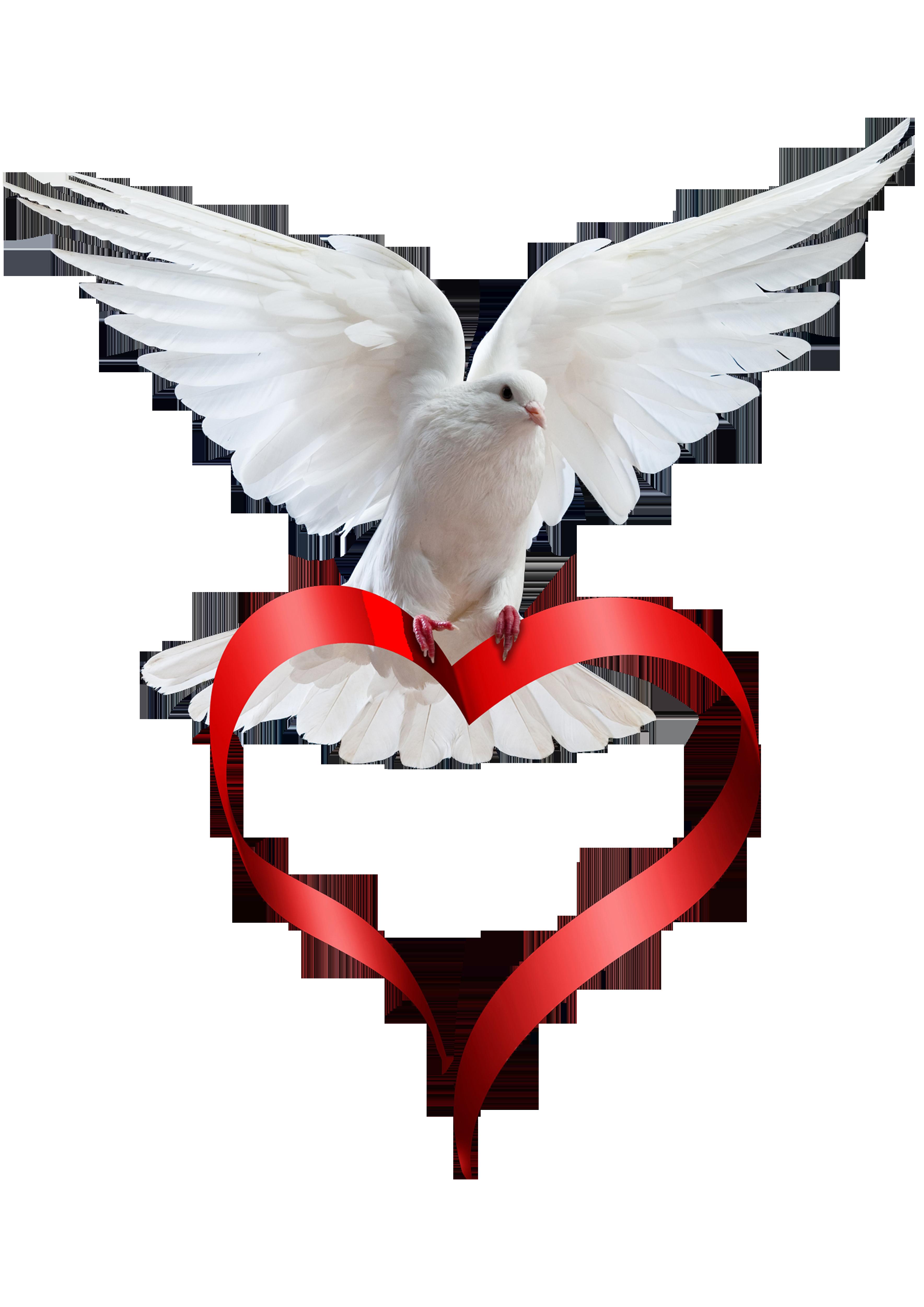 Animation death photography peace. Hummingbird clipart heart
