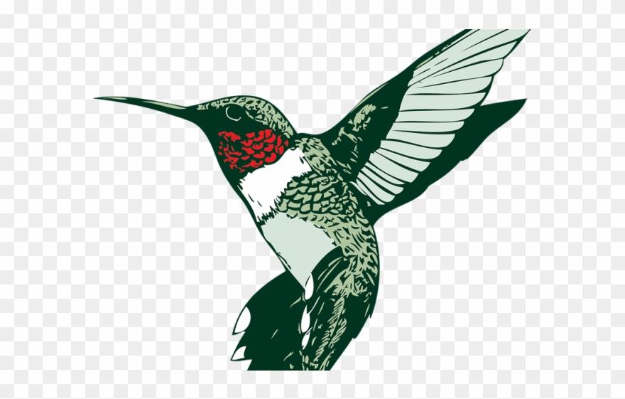 Hummingbird clipart heart. Clip art png download