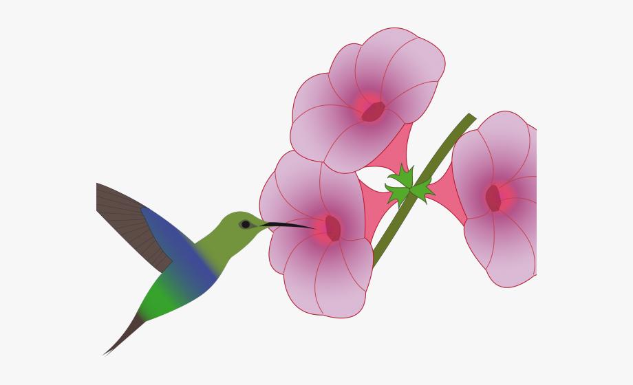Clip art . Hummingbird clipart hummingbird flower