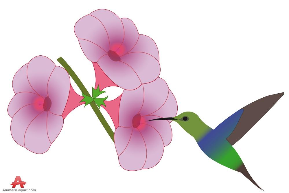 Hummingbird clipart hummingbird flower. Hummingbirds and flowers clipartandscrap