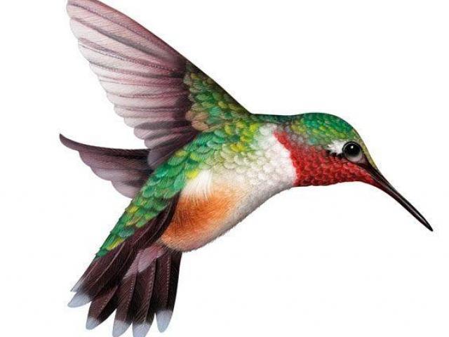 Hummingbird clipart hummingbird outline. Free download clip art