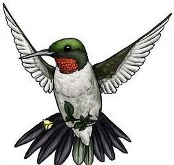 Hummingbird clipart hummingbird outline. Free pictures clipartix