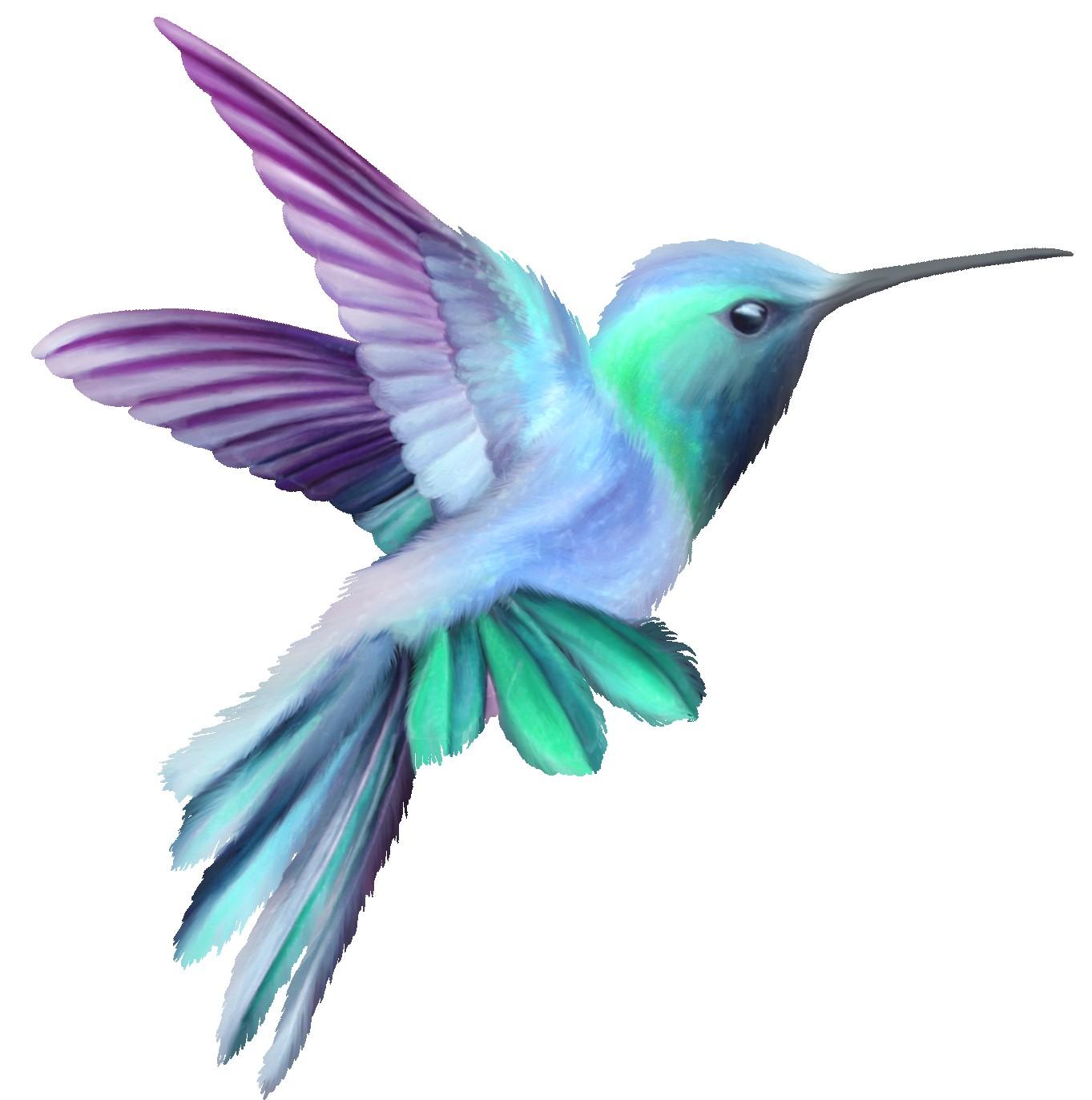 Hummingbirds station . Hummingbird clipart hummingbird outline