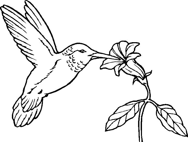 Hummingbird clipart jungle flower. Humming birds coloring for