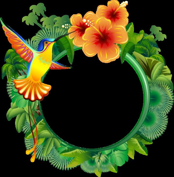 Tubes cadres chez love. Hummingbird clipart jungle flower