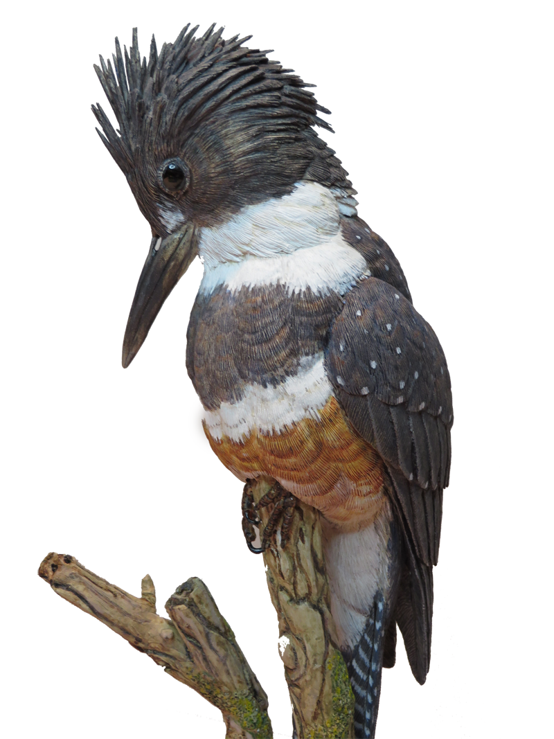 Cutout png pixels carved. Hummingbird clipart kingfisher