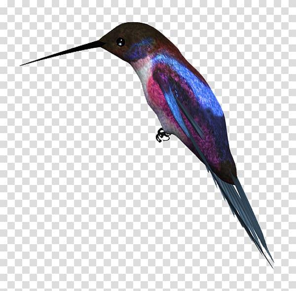 Birds transparent background png. Hummingbird clipart kingfisher