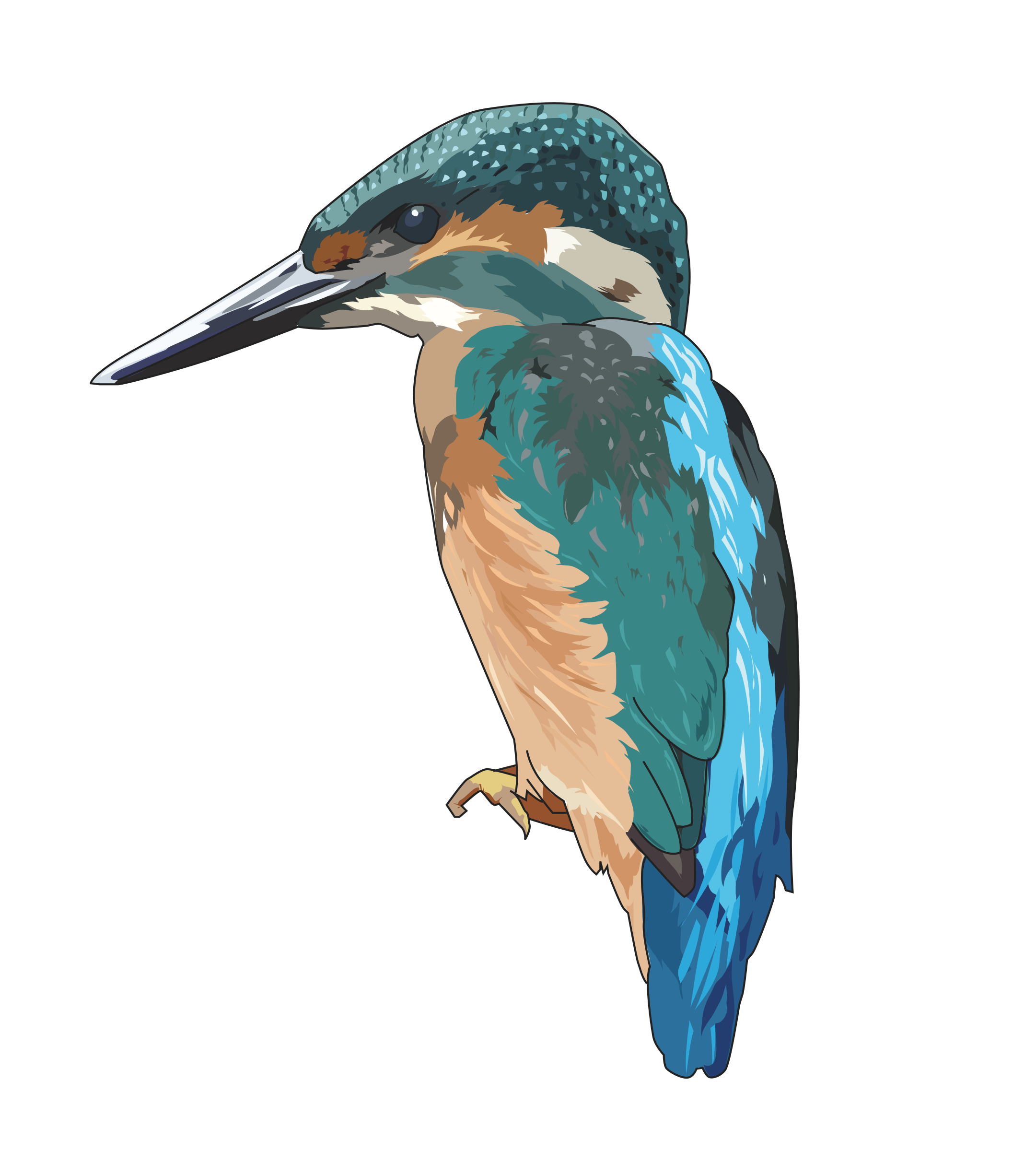 Icons png free and. Hummingbird clipart kingfisher