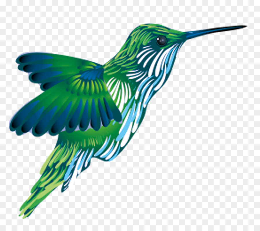 Hummingbird clipart kingfisher. Background green png download