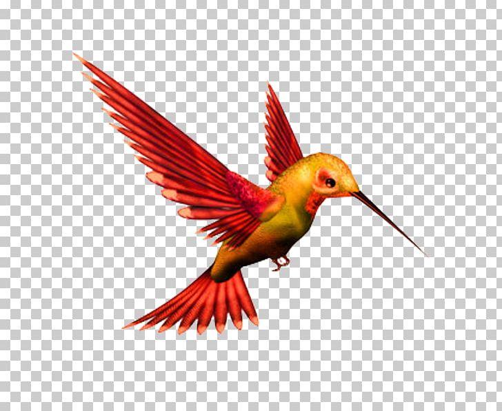 Hummingbird clipart kingfisher. Png algorithm animals