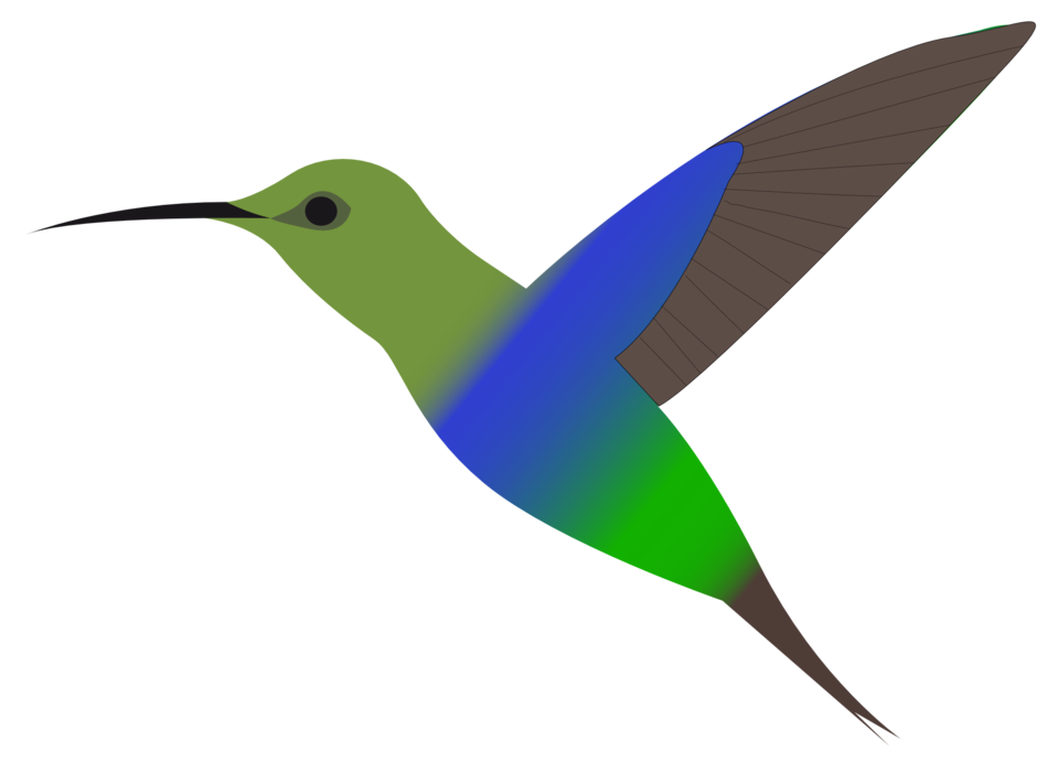 Hummingbird public domain