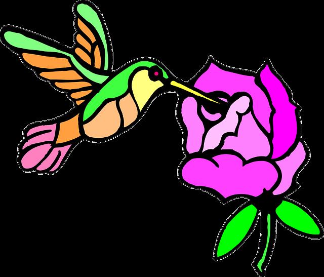 Hummingbird clipart rainbow. Forgetmenot birds hummingbirds publicat