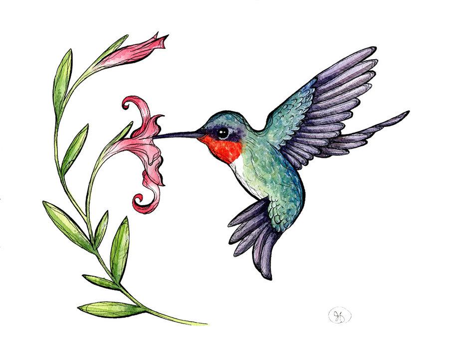 Images portal . Hummingbird clipart real