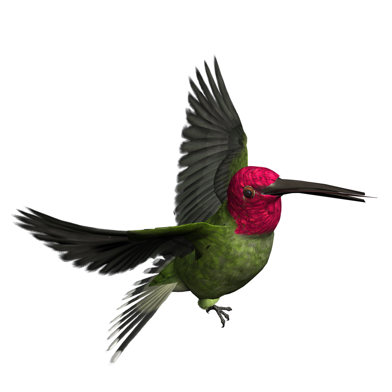 Hummingbird clipart realistic animal. Birds png images free