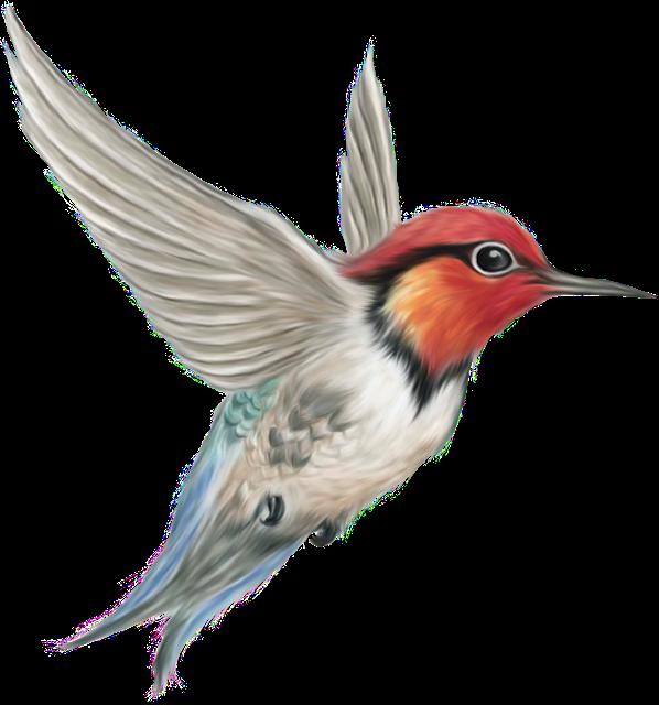 Hummingbird clipart realistic animal. Happy new year of
