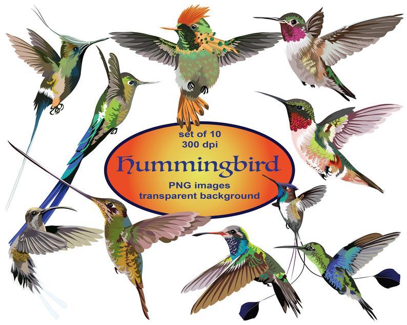 Digital birds bird clip. Hummingbird clipart realistic animal