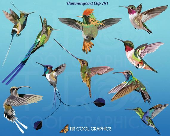 Digital clip art commercial. Hummingbird clipart realistic animal