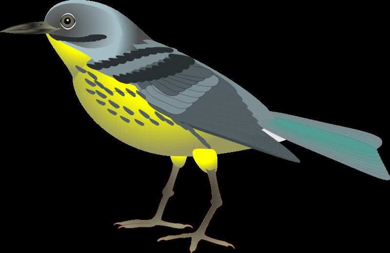 Bird print your animal. Hummingbird clipart royalty free