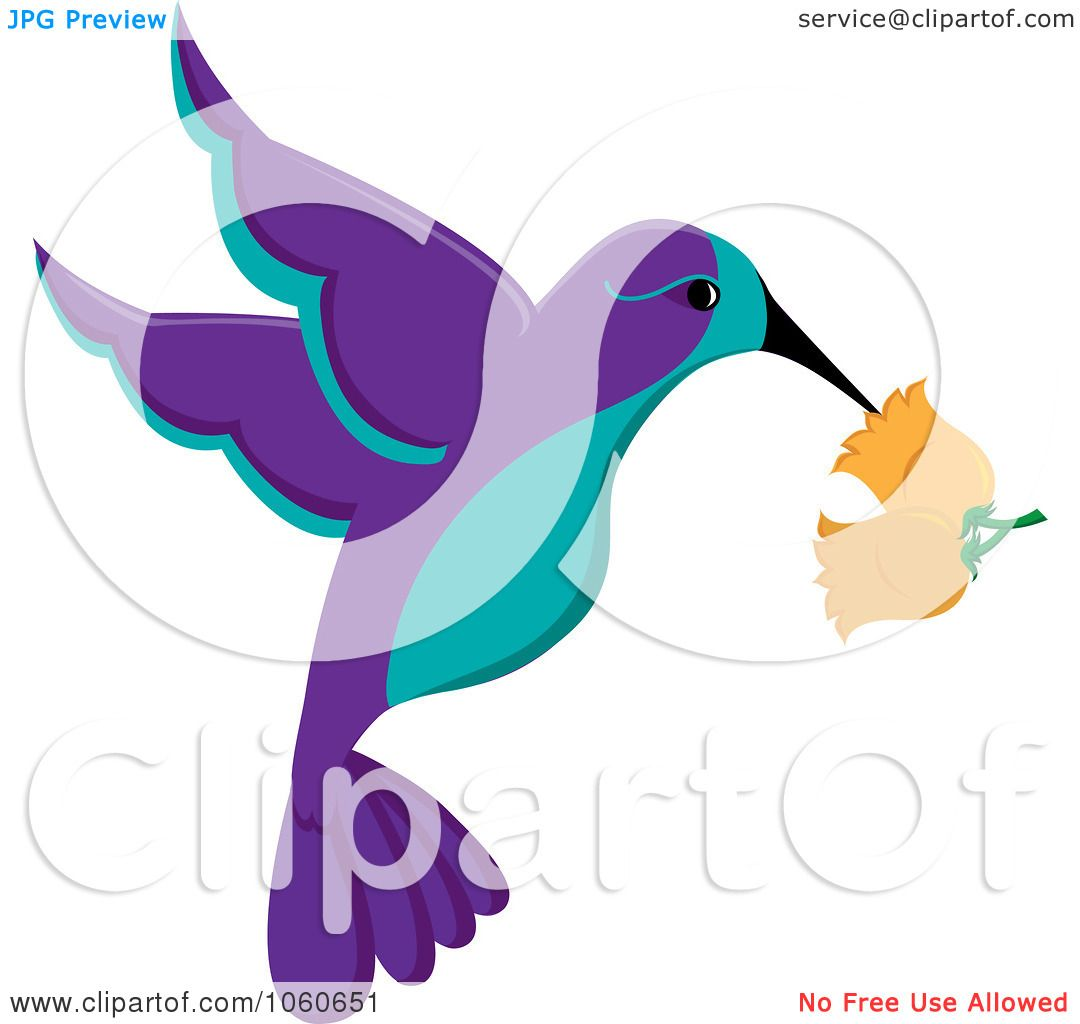 Hummingbird clipart royalty free. Download best