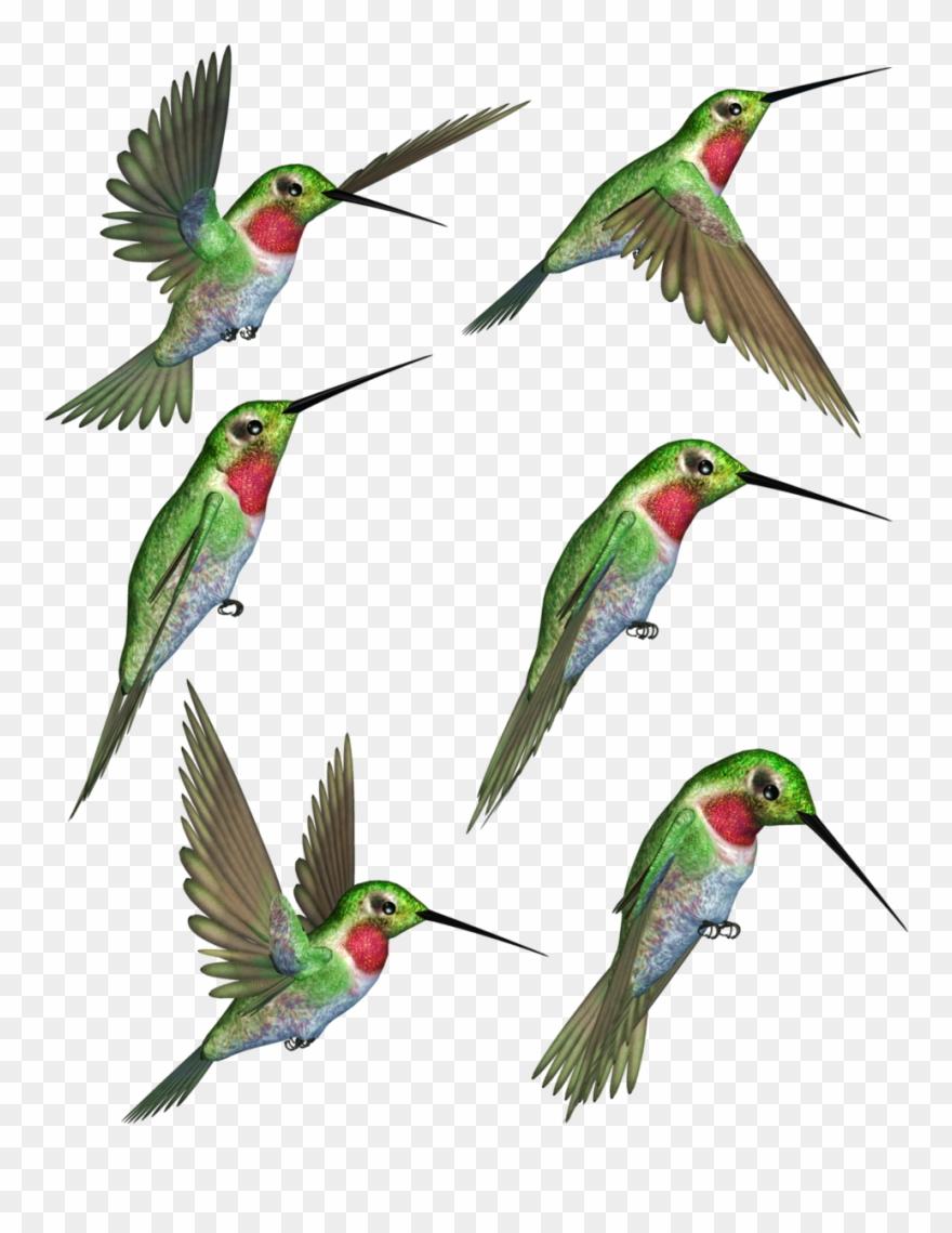 Clip art rubythroated transprent. Hummingbird clipart ruby throated hummingbird