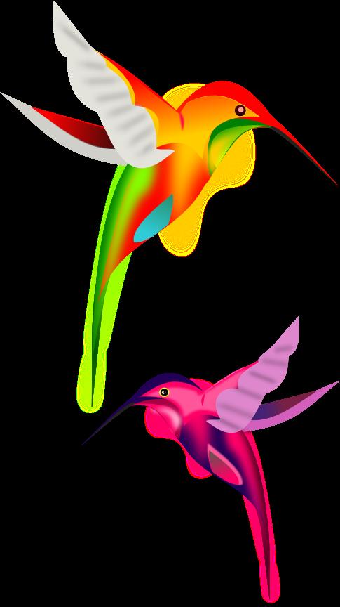 Hummingbird transparent background