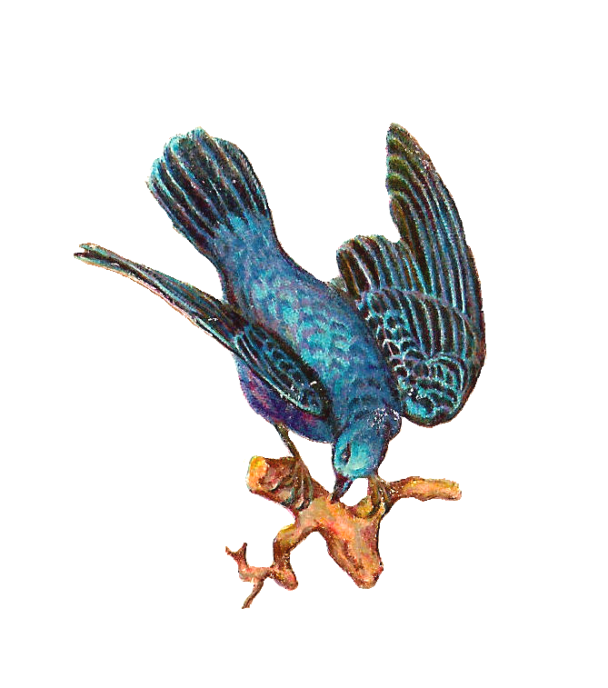 Hummingbird clipart vintage. Antique images free bird