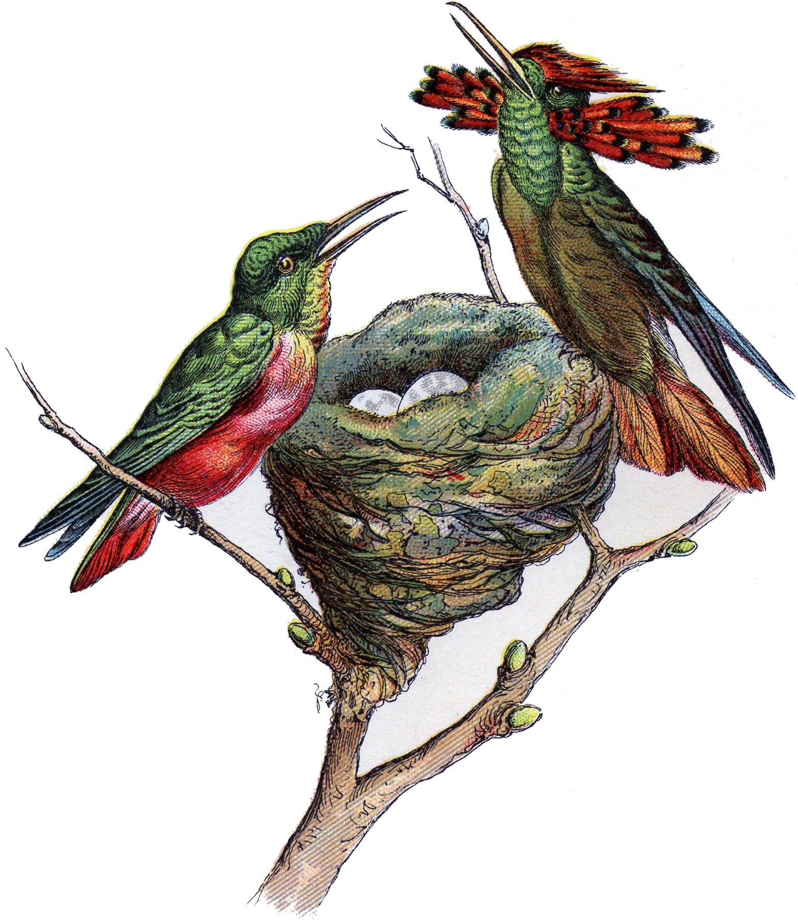 Hummingbird clipart vintage.  graphics images updated