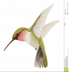 Free images at clker. Hummingbird clipart vintage