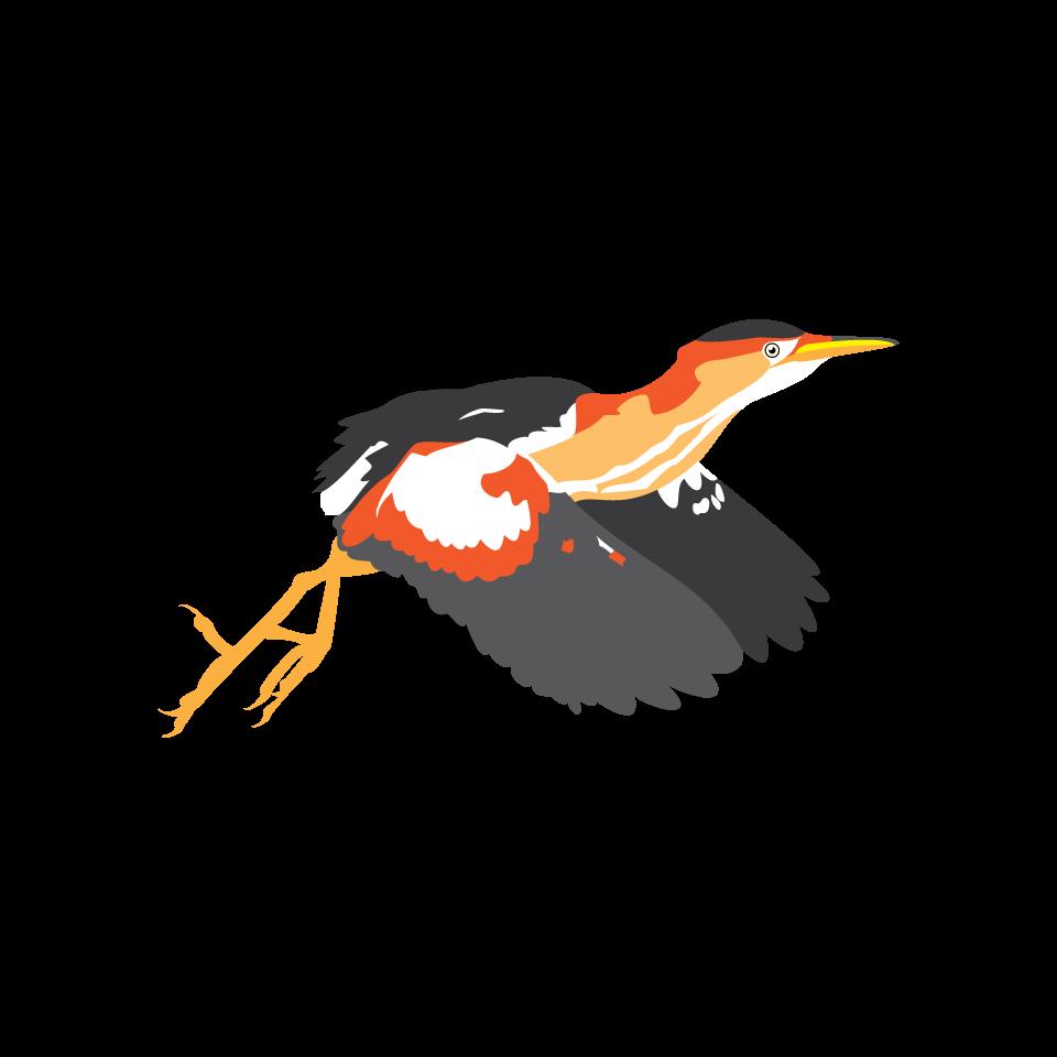 Bird type coloveration least. Hummingbird clipart xantus