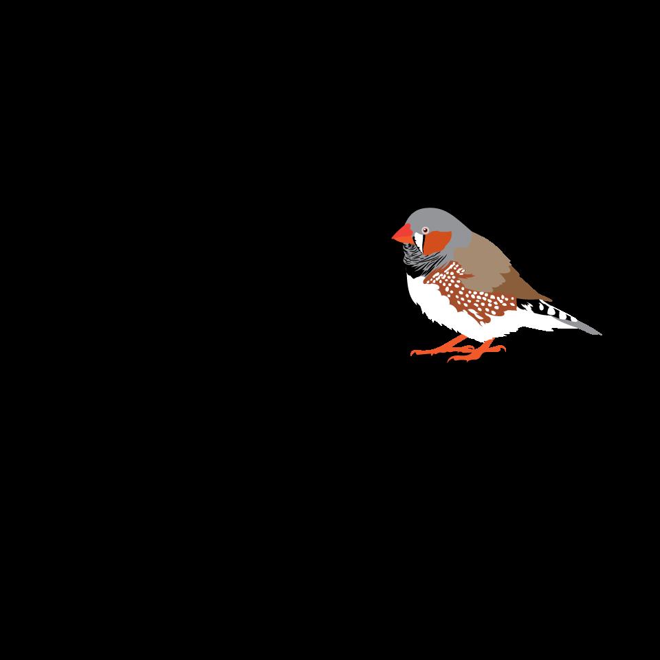 Bird type coloveration . Hummingbird clipart xantus