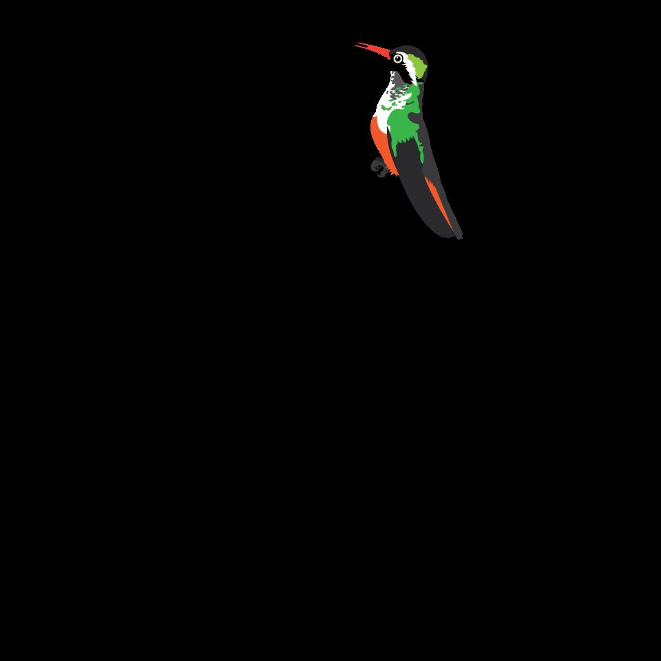 Bird type coloveration. Hummingbird clipart xantus