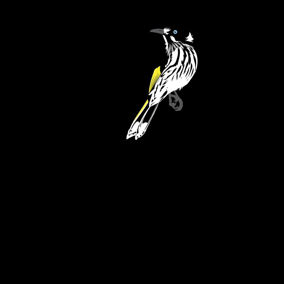 Hummingbird clipart xantus. Bird type coloveration new