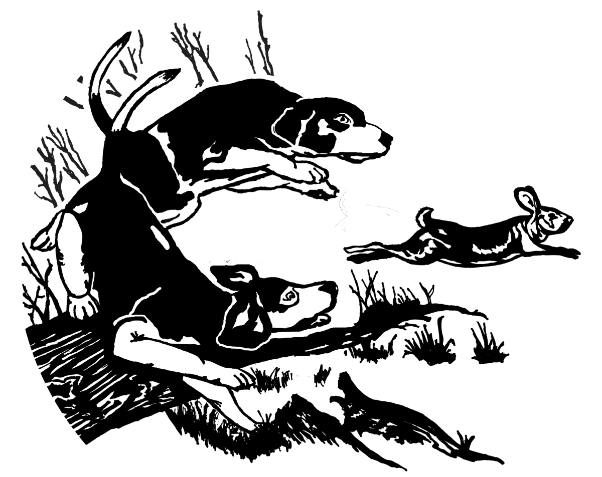 Rabbit hunting stuff jumped. Hunter clipart hunter dog