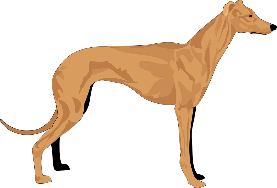 Cliparts shop of library. Hunting clipart beagle