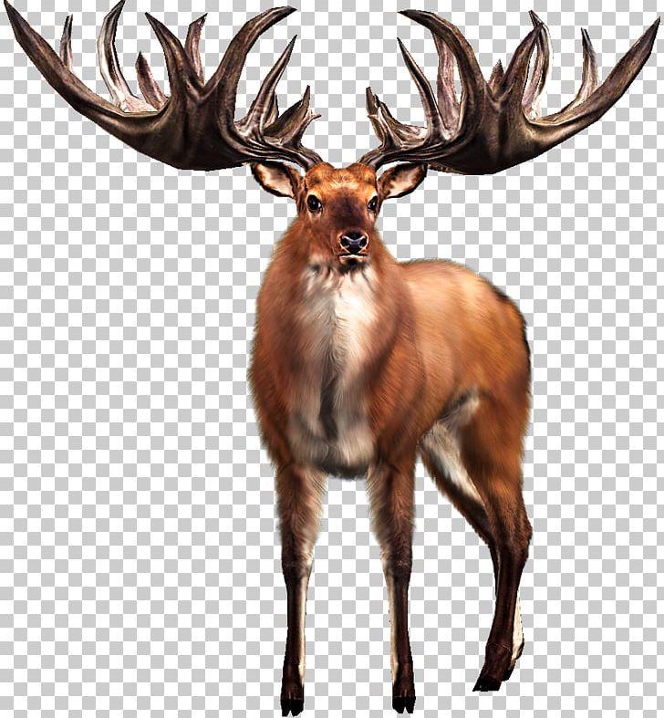 Irish elk white tailed. Hunting clipart big buck