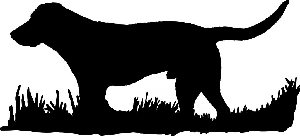 Labrador retriever bird dog. Hunting clipart black lab