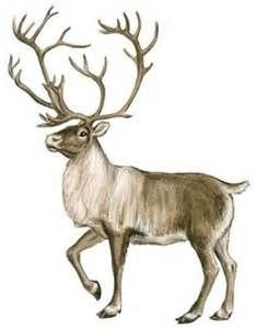 Yahoo image search results. Hunting clipart caribou