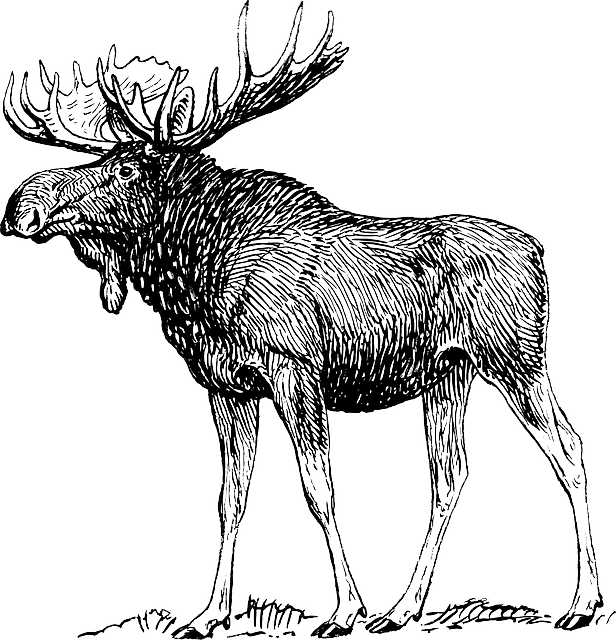 Free technology for teachers. Hunting clipart caribou