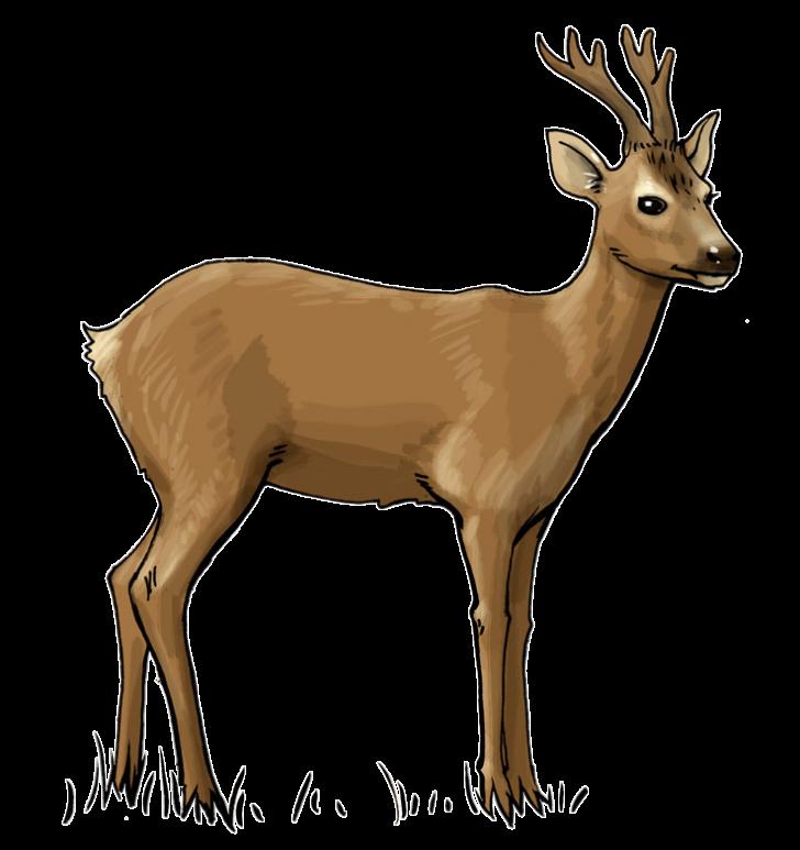 Deer free download best. Hunting clipart elk